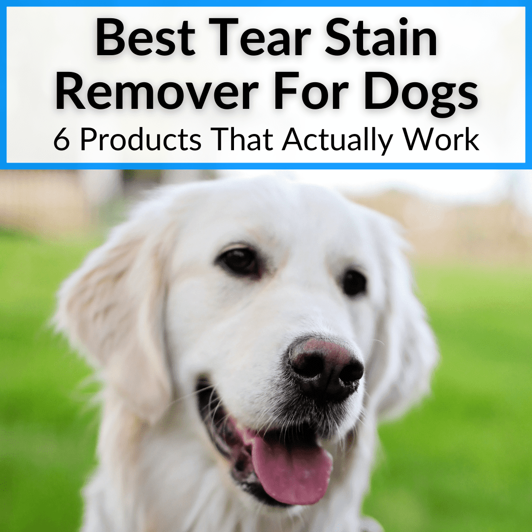 Best Tear Stain Remover For Dogs
