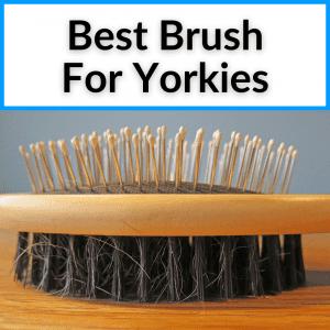 Best Brush For Yorkies