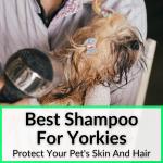 Best Shampoo For Yorkies