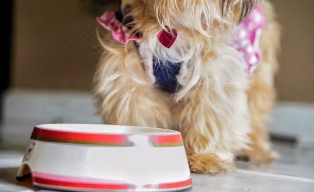 What Should I Not Feed My Yorkie?