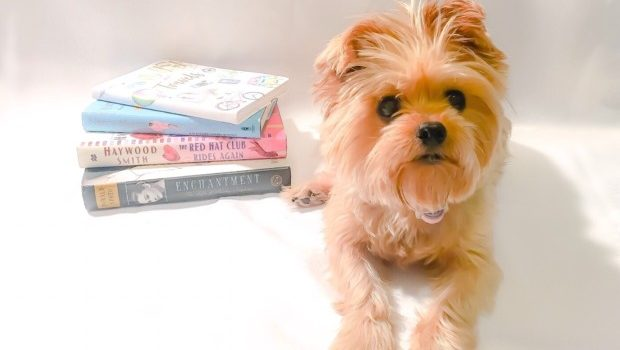 This Is Why Your Yorkie May Be White   Genetics & MORE