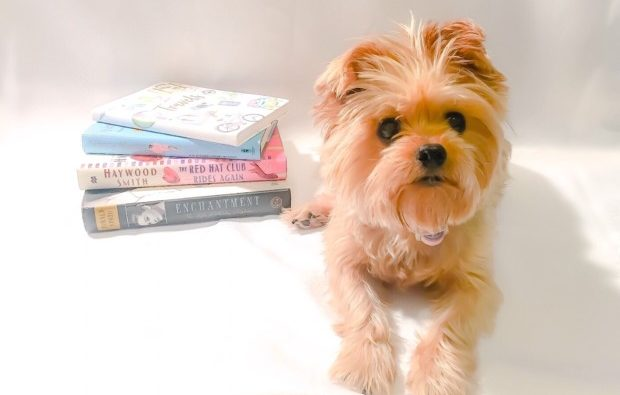 This Is Why Your Yorkie May Be White | Genetics & MORE