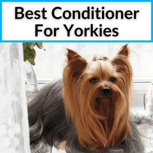 Best Conditioner For Yorkies