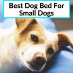Best Dog Bed For Small Dogs